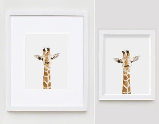 giraffe close up the animal print shop by sharon montrose - Kids Animal Prints