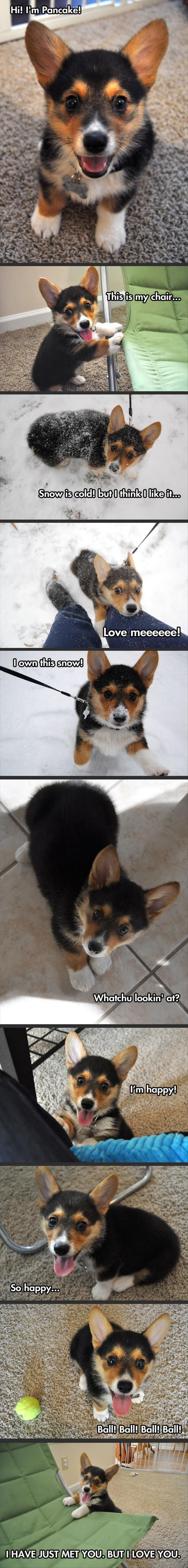 Pin On Animal Friendships