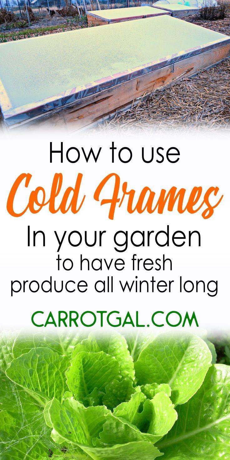 Cold Frames - | Greenhouse & Garden ~Homegrown~ Food | Pinterest ...