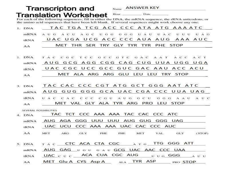 Dna Transcription And Translation Worksheet Answers ...