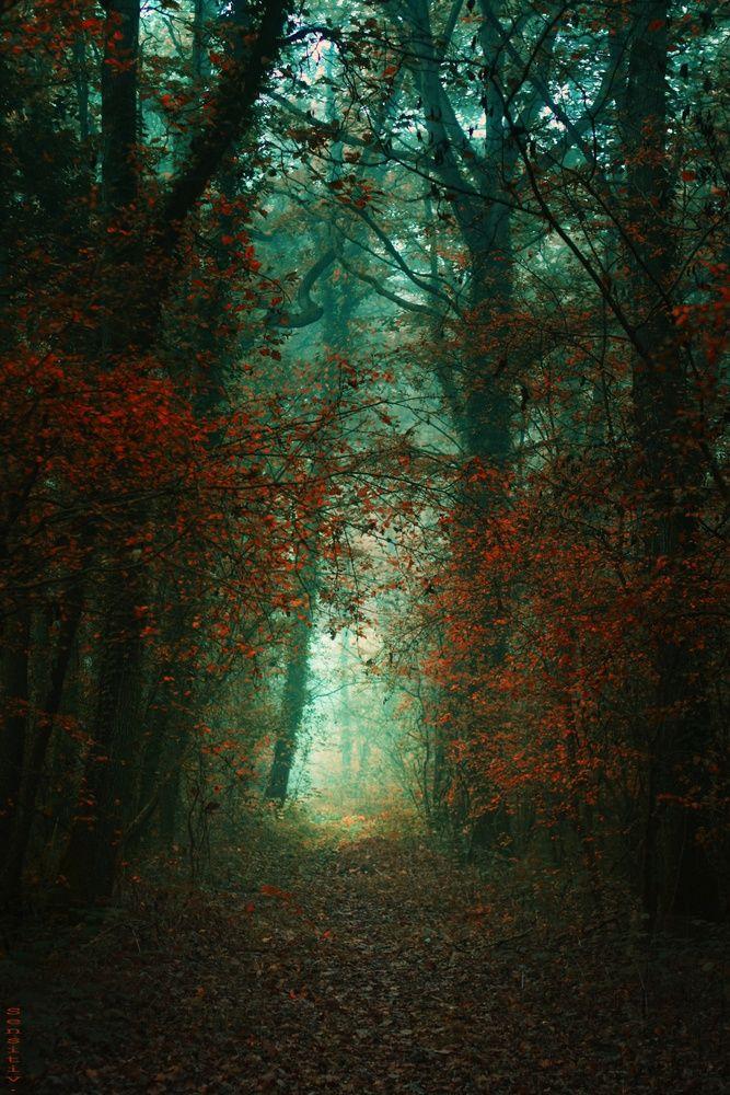 Au pays des fées ... de Sensitiv-Camille | Trees | Pinterest ...