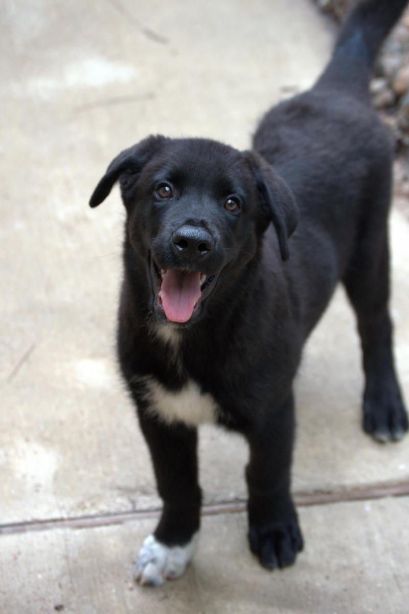 Adopt Barnaby on Dog mixes, Labrador retriever, Animal