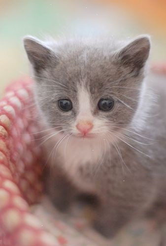 I used to ask Santa for a kitten that looked exactly like ...
