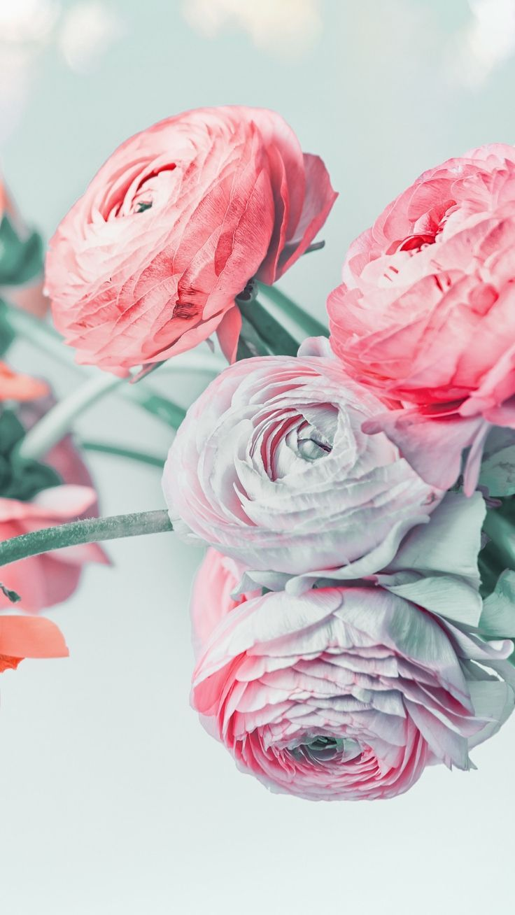 27 Super Pretty Iphone 8 Plus Wallpapers Floral Wallpaper Iphone
