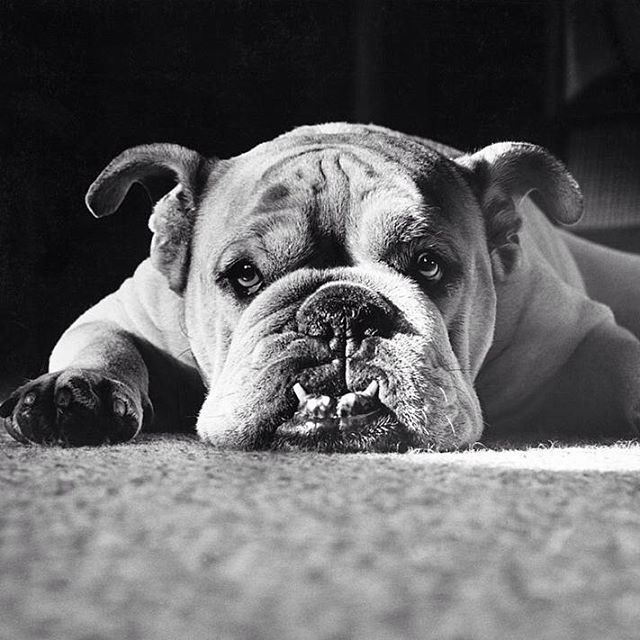 Sunday Chillin Sunglasses Sundays Bulldogs