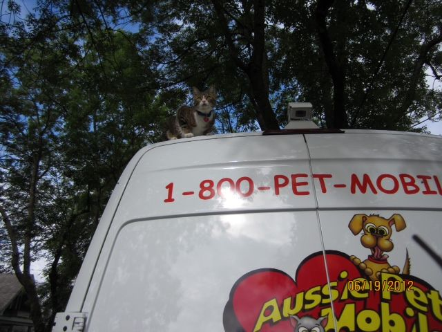 Aussie Pet Mobile Pet Grooming And Pet Retrieval Cat Dog Grooming Pet Grooming Pets Dog Grooming