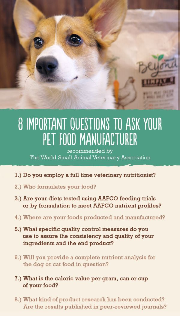 The World Small Veterinary Association Recommends Asking A Few Key