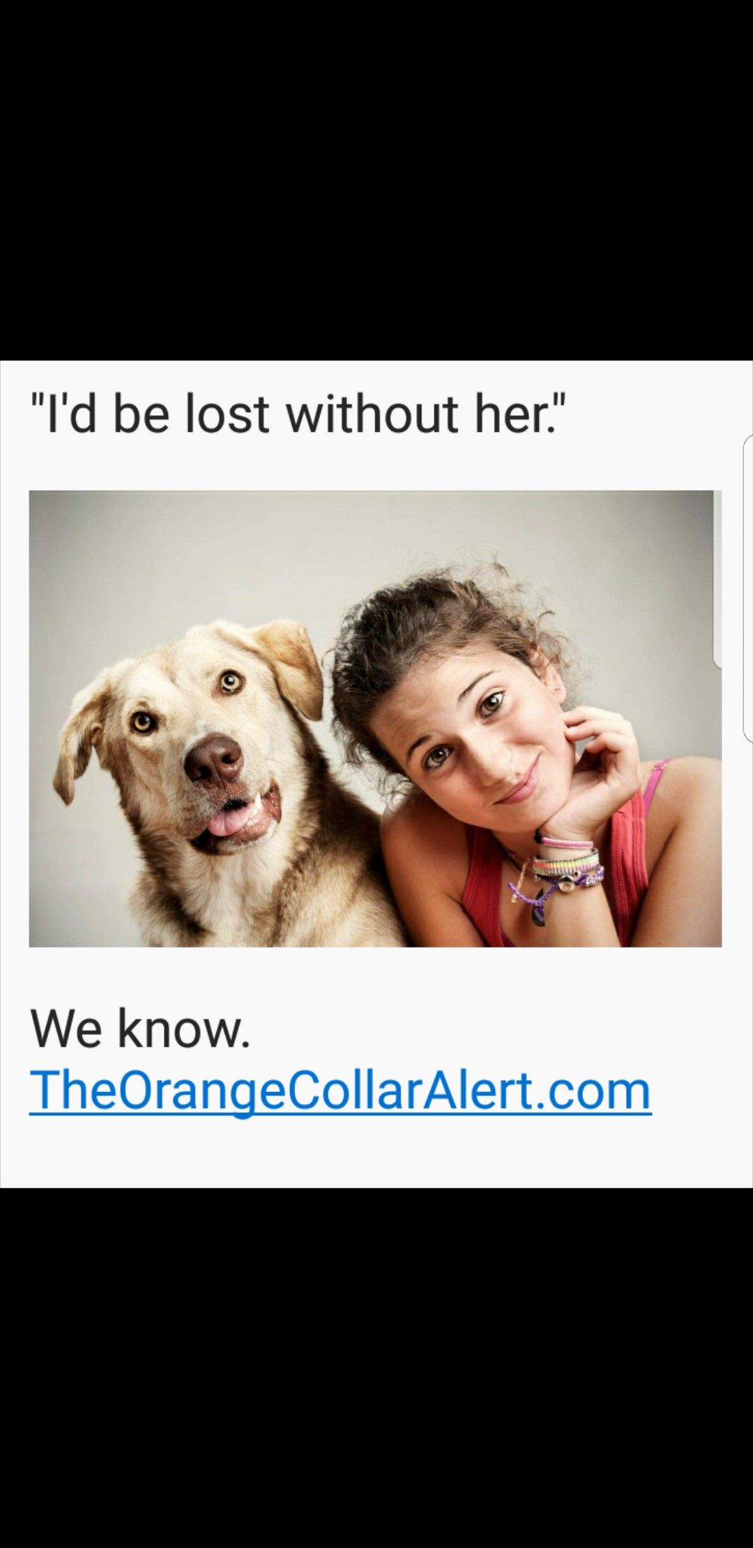 One Orange Collar can save your pet, help pass laws for