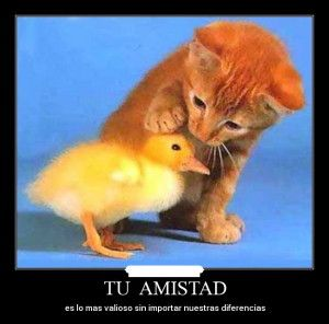 Imágenes Las diferencias no son obstáculos en la amistad - Imagenes de Amistad