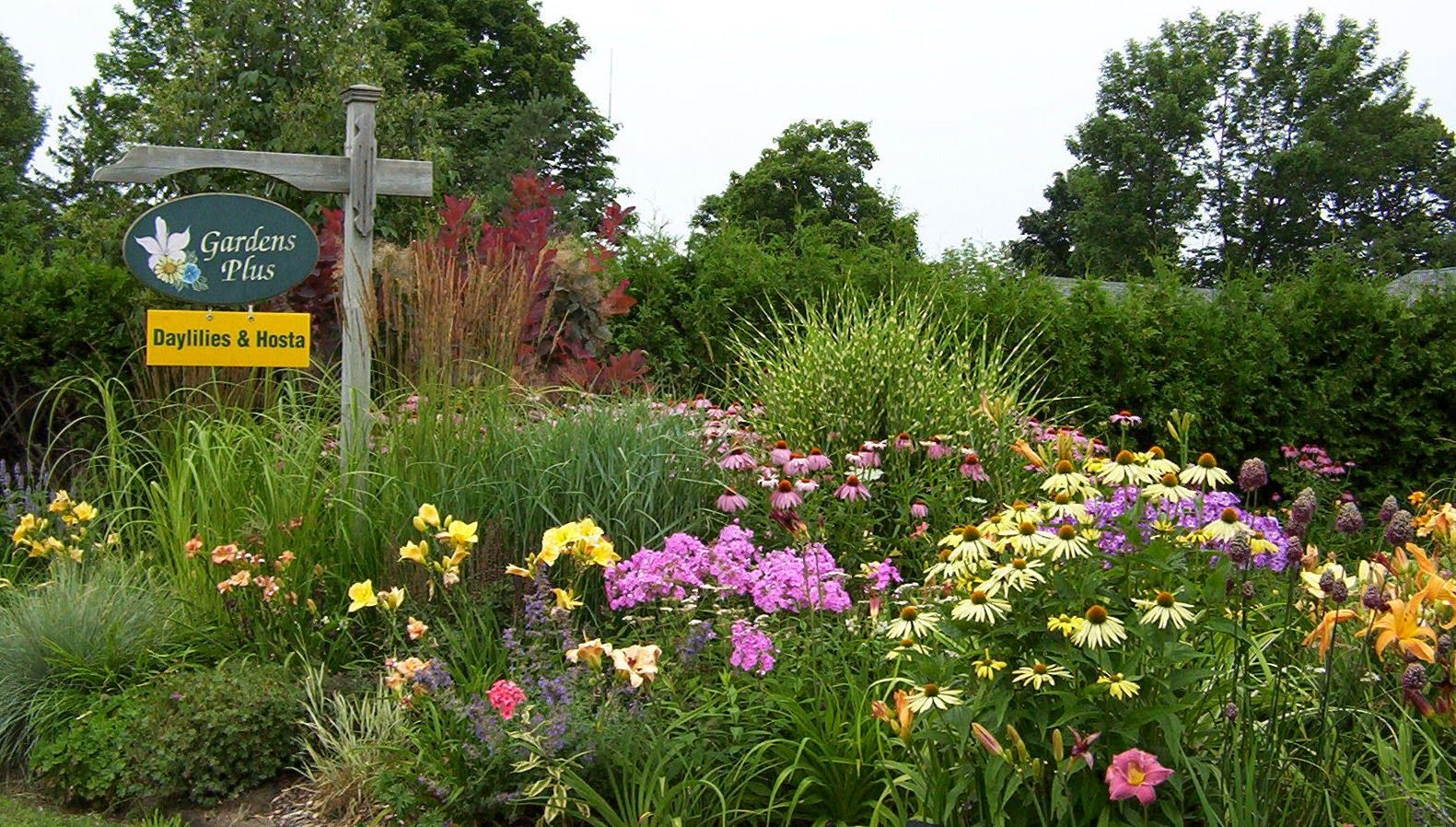 Daylilies Hosta And Other Perennials Pleasant Plantation