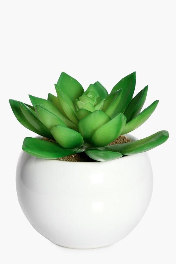 Boohoo Faux Cactus In Ceramic Plant Pot Green Aesthetic Green Color Palette Green Things Green Everythi Ceramic Flower Pots Cactus Plant Pots Faux Cactus