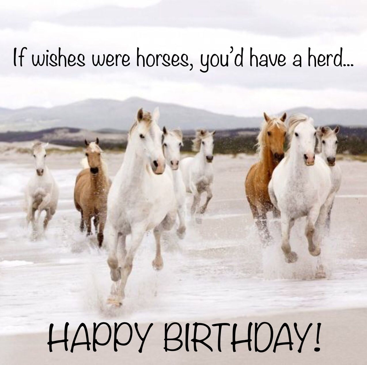 Happy Birthday Horses (With Images)