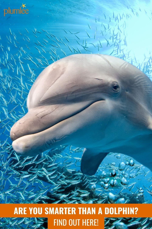At Dolphin Bay 2003 Episodes Mydramalist