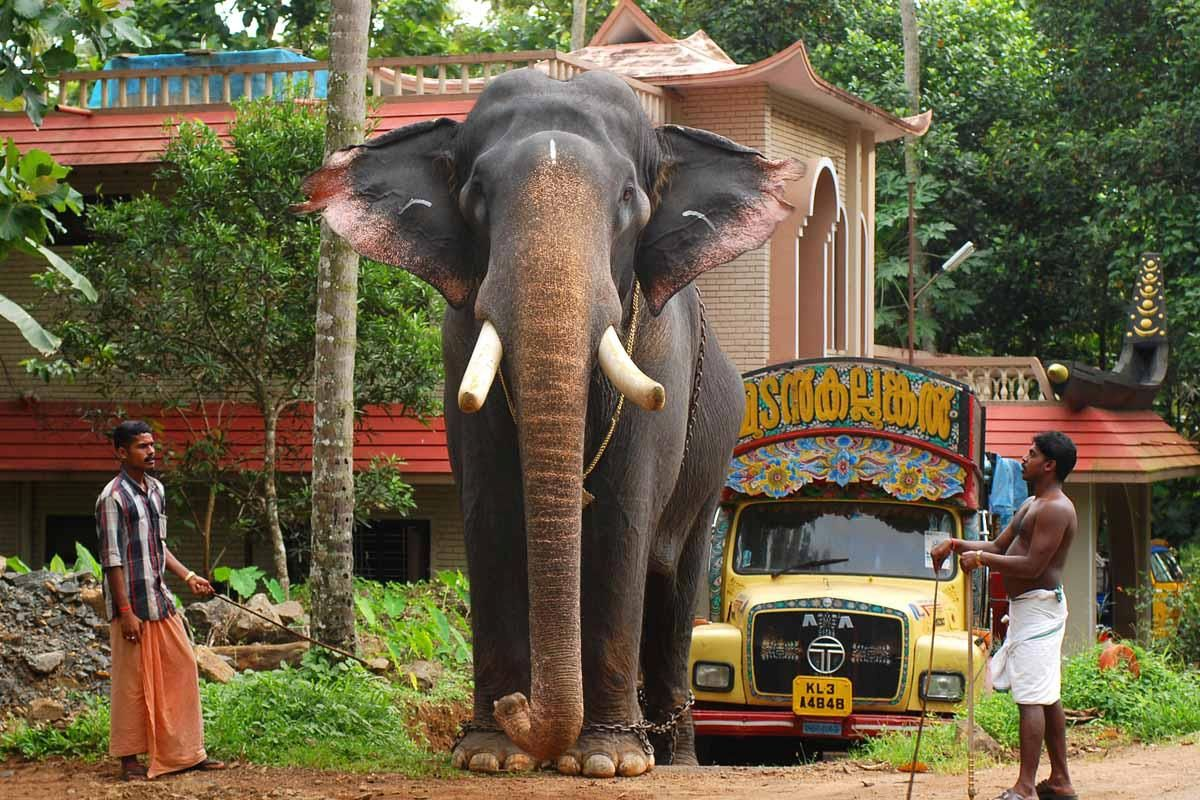 1080p Images: Kerala Elephant Wallpaper Hd 1080p