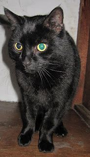 Mort Is A Lovely Boy Full Of Affection And About 6 Years Old Rehoming Animals Adoption