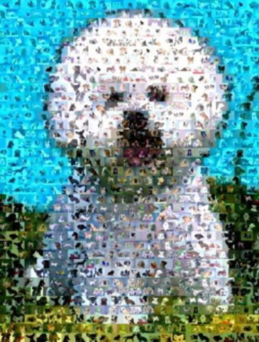 Amazing Bichon Frise Dog Montage LIMITED EDITION w//COA