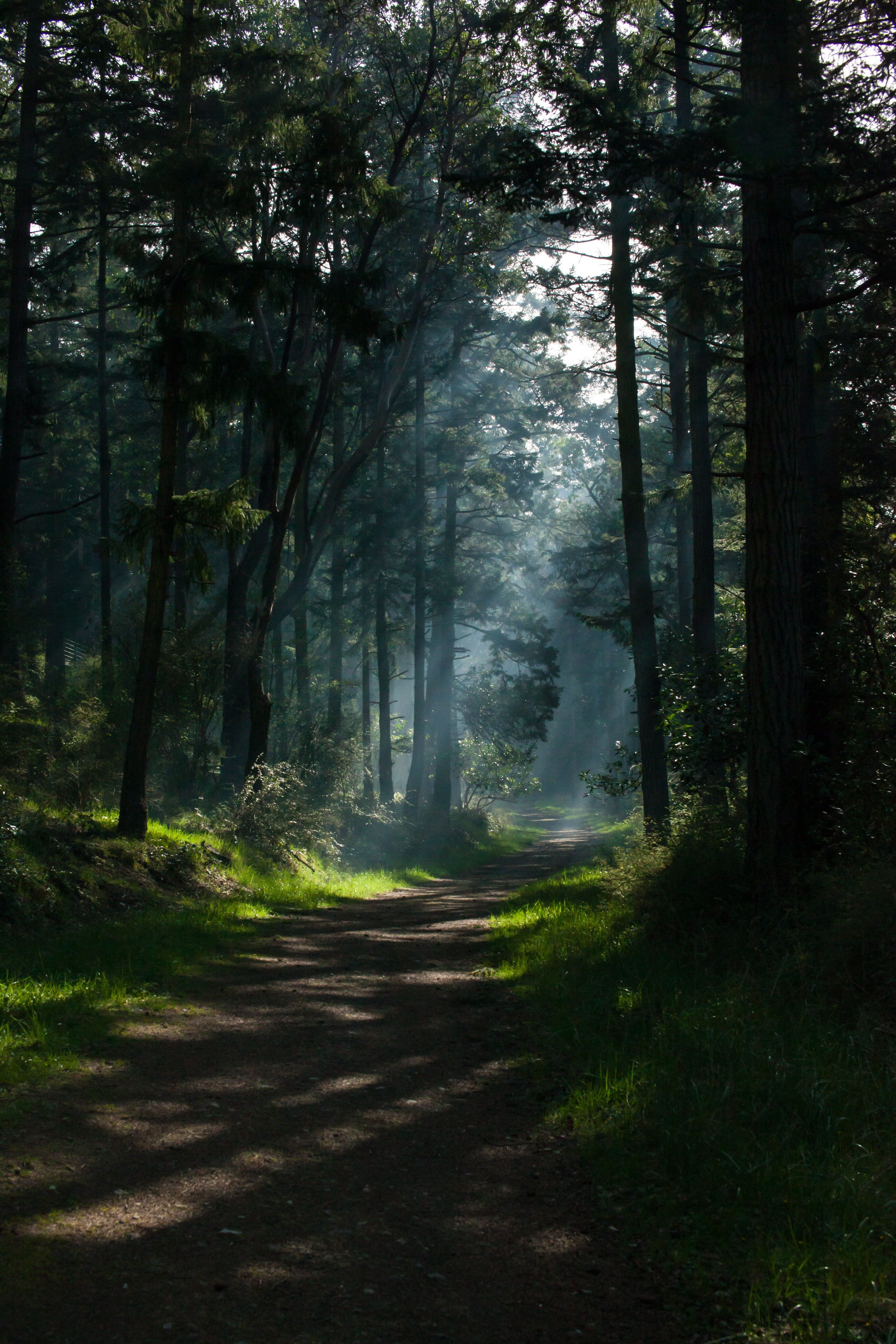 Nature Trees Portrait Display Path Forest Sunlight Dappled Sunlight Sun Rays Shadow 5k Wallpaper Hdwa Scenery Nature Photography Landscape Photography