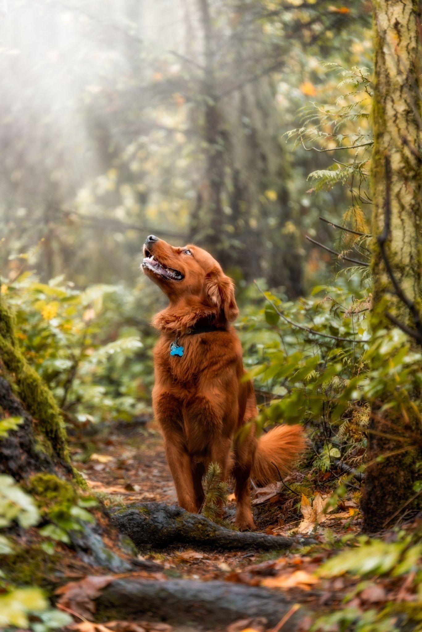Pin On Victoria Bc Dog Photographer Gord Rufh Dog Photography