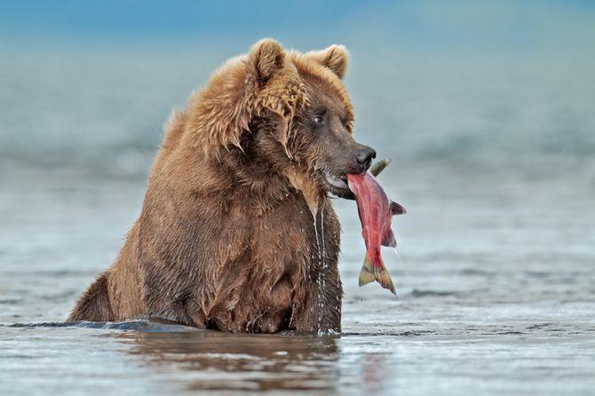 Stunning Winners of National Geographic 2011 Russian Wildlife Photo Contest Creative Design   farshid ramezani