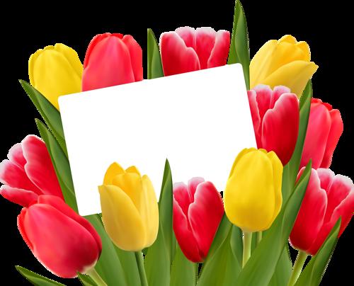 Pin by Erzsébet Szilágyi on Csak tulipánok Tulipán