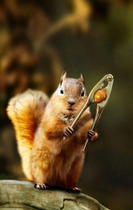 http://www.meriamber.com/blog/2013/12/poem-dedicated-to-a-dedicated-nut-cracker/ Nut cracker poem