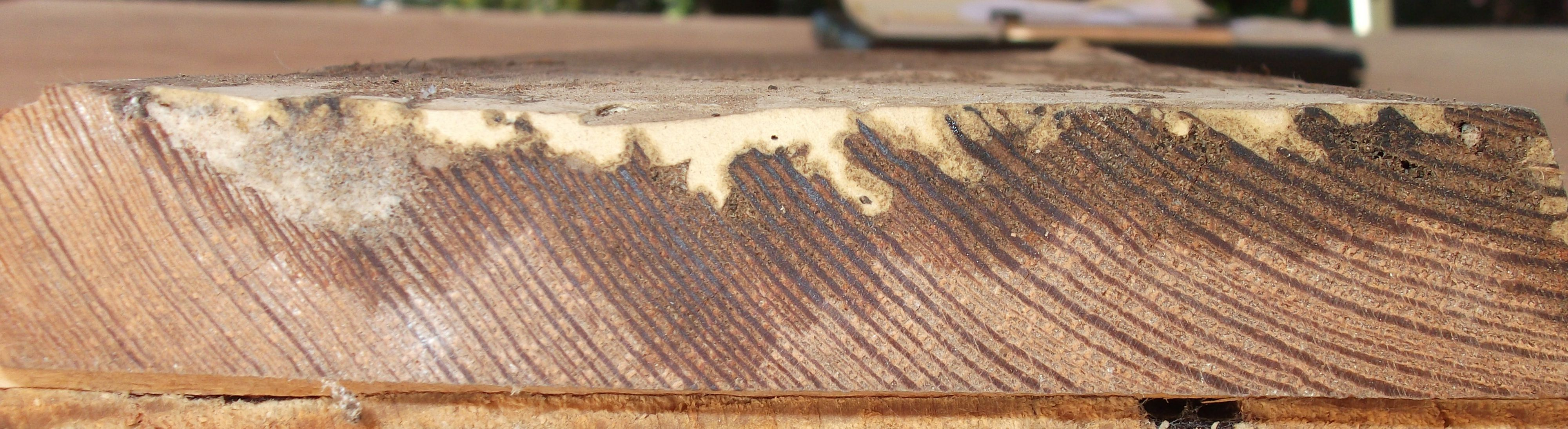 This side view of a board shows the different components. The light wood is the strong original wood. The dark wood s where the LiquidWood soaked and sealed fragile wood to the strong wood. The cream-colored WoodEpox fills in the groves, holes, or damaged areas.