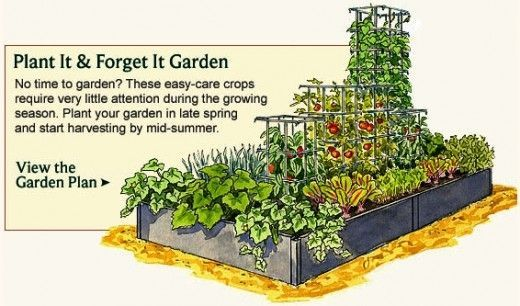 Just what I need - plant it and forget it, lol Vegetable ...