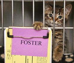 Foster Cat With Images Foster Cat The Fosters Animal Rescue