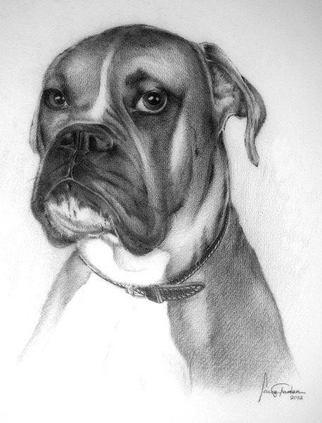 Dibujo De Un Perro Boxer A Lapiz Dibujo De Perro Perros Boxer Dibujos De Perros