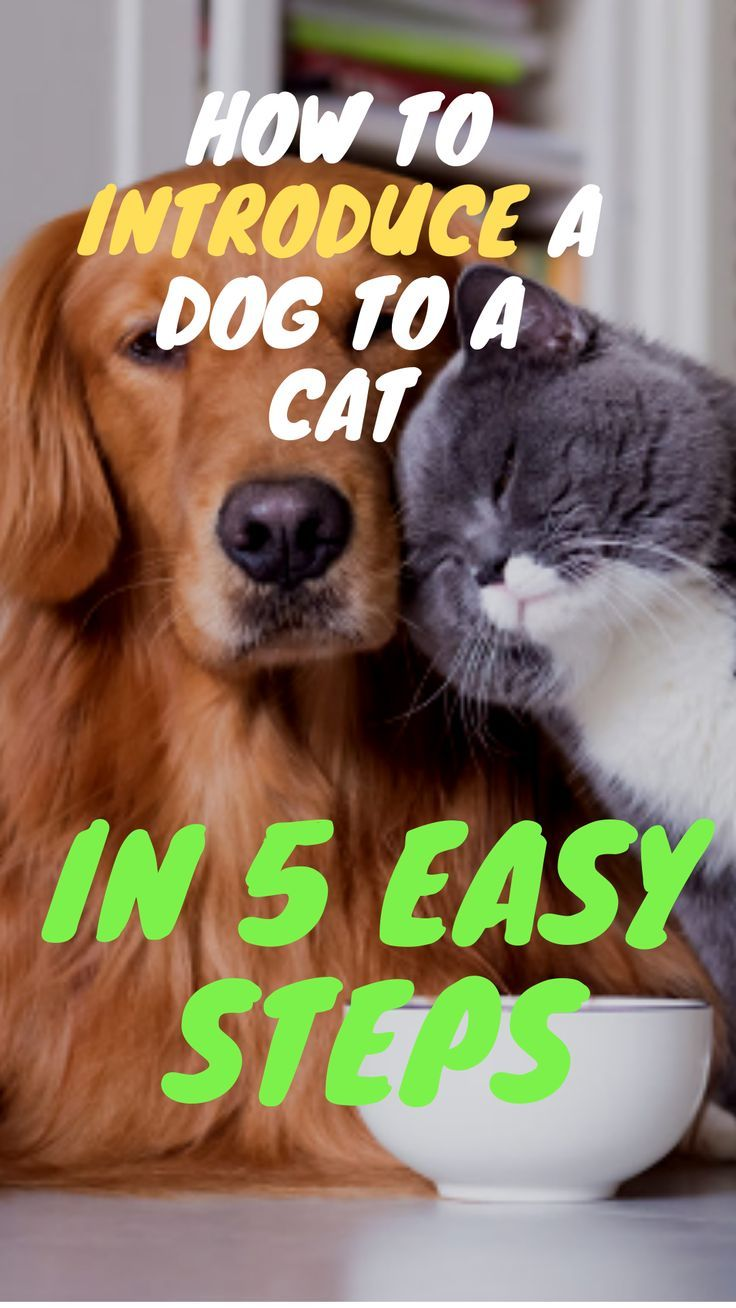 Knowing How To Introduce A Dog In A Cat To Each Other Properly Is Essential If We Re Thi Introducing Kitten To Dog Introducing Dog To Cat How To Introduce Cats
