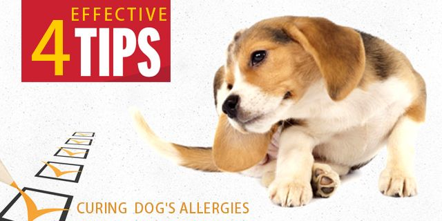4 Effective Tips That Will Assist You In Curing Your Dog S Allergies Dogs Allergies Cheap Pet Supplies