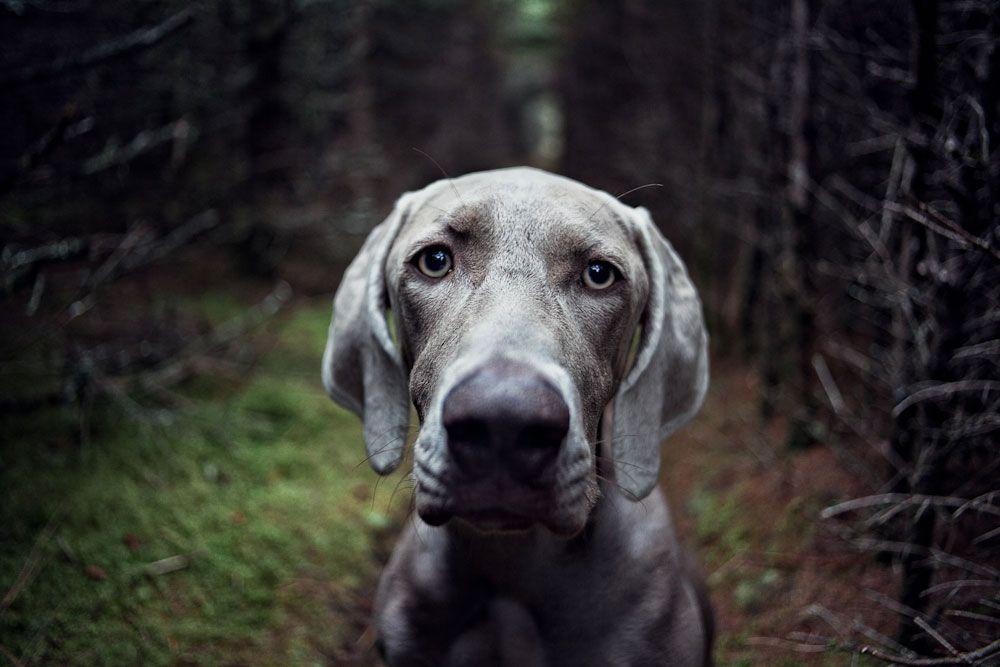 Senior-Dogs-PHUNRISE-15