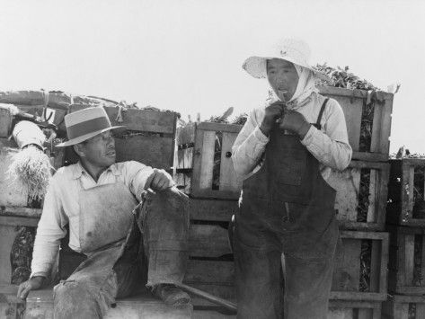 Japanese American Experience Japanese American Japanese Farmer