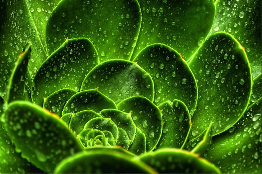 35 Breathtaking Examples Of Patterns In Nature Patterns In