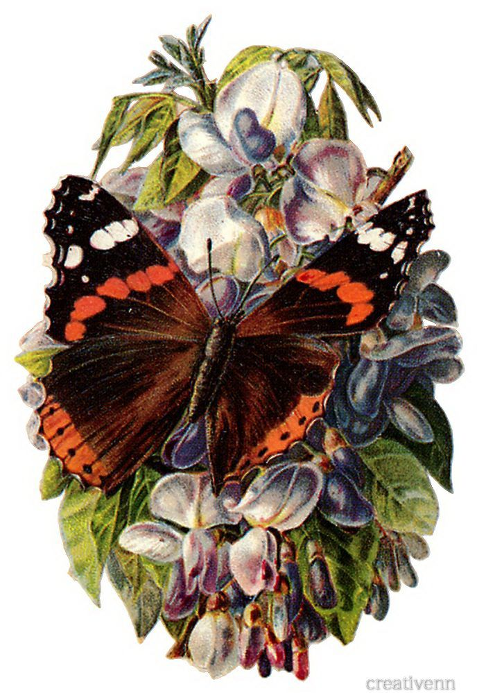 Ретро открытки с бабочками