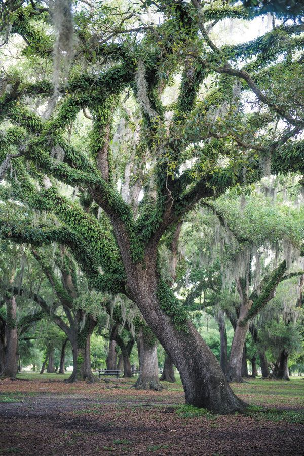 The Park Is One Of Largest Urban Parks In Country Encomping Among Other Things New Orleans Botanical Garden Museum A