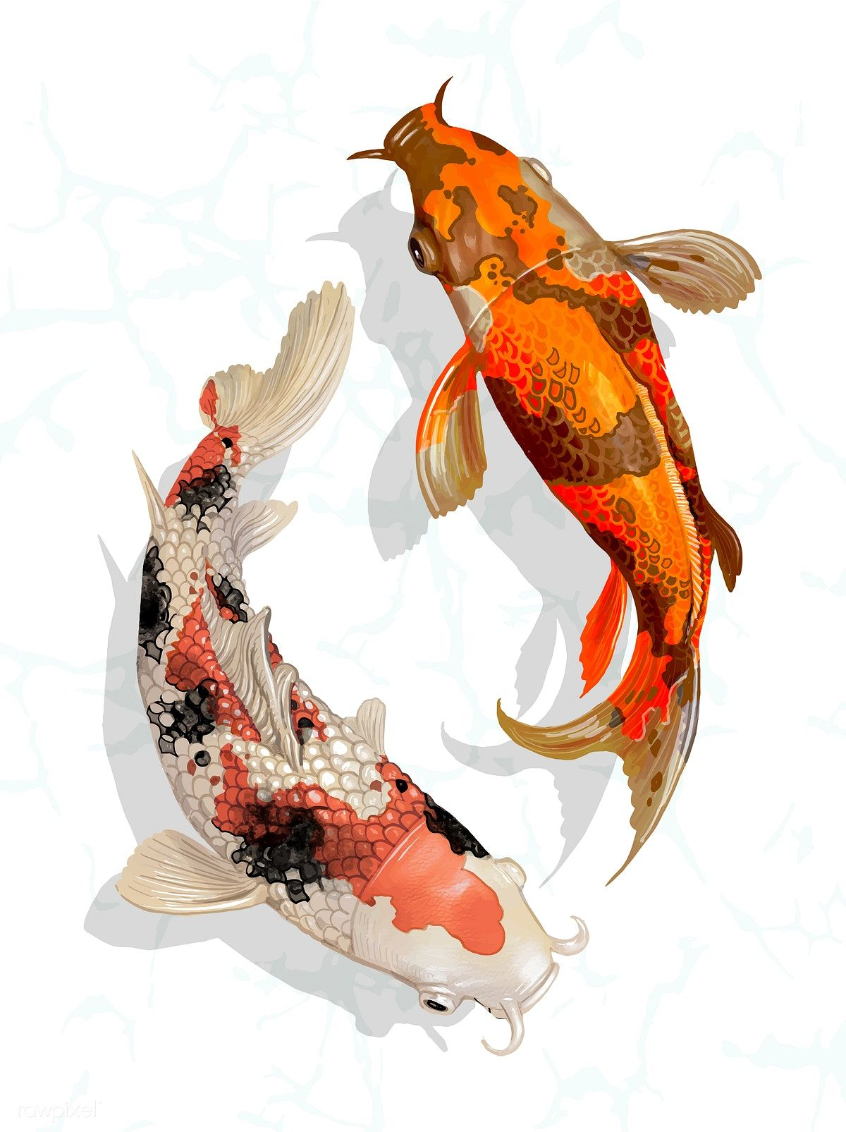 Download Premium Vector Of Two Japanese Koi Fish Swimming 449929 Koi Fish Koi Art Japanese Koi