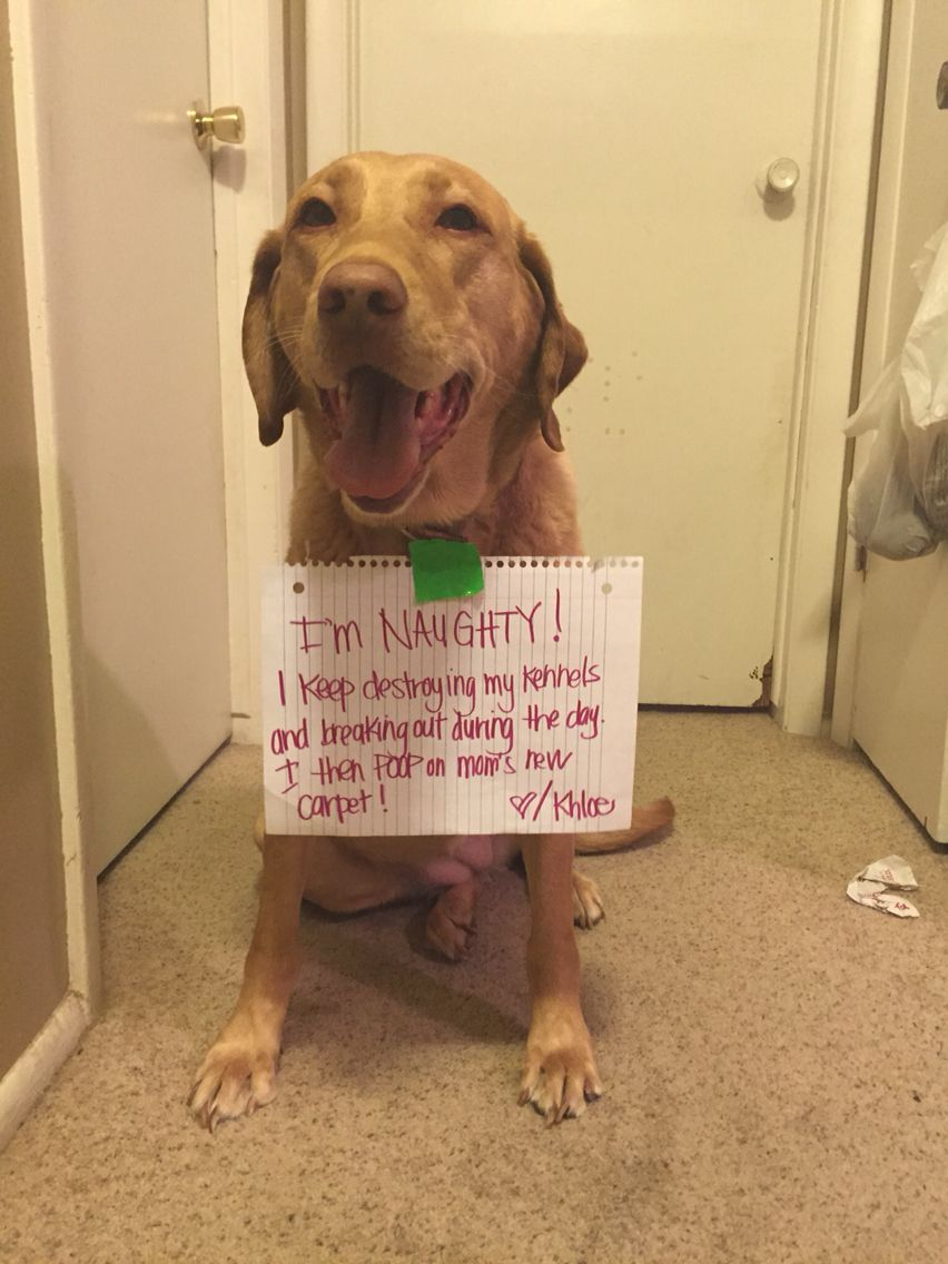 Lol naughty dog