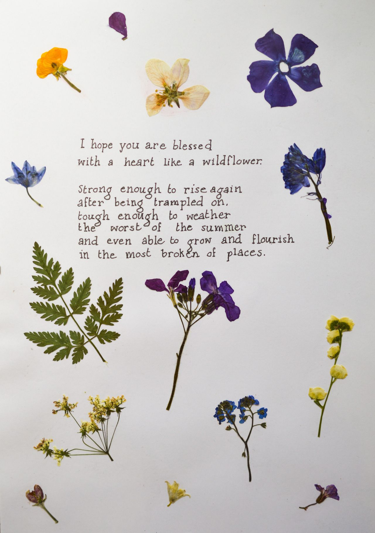 I Am SO MUCH MORE THAN My Illness — I hope you are blessed with a heart like a...