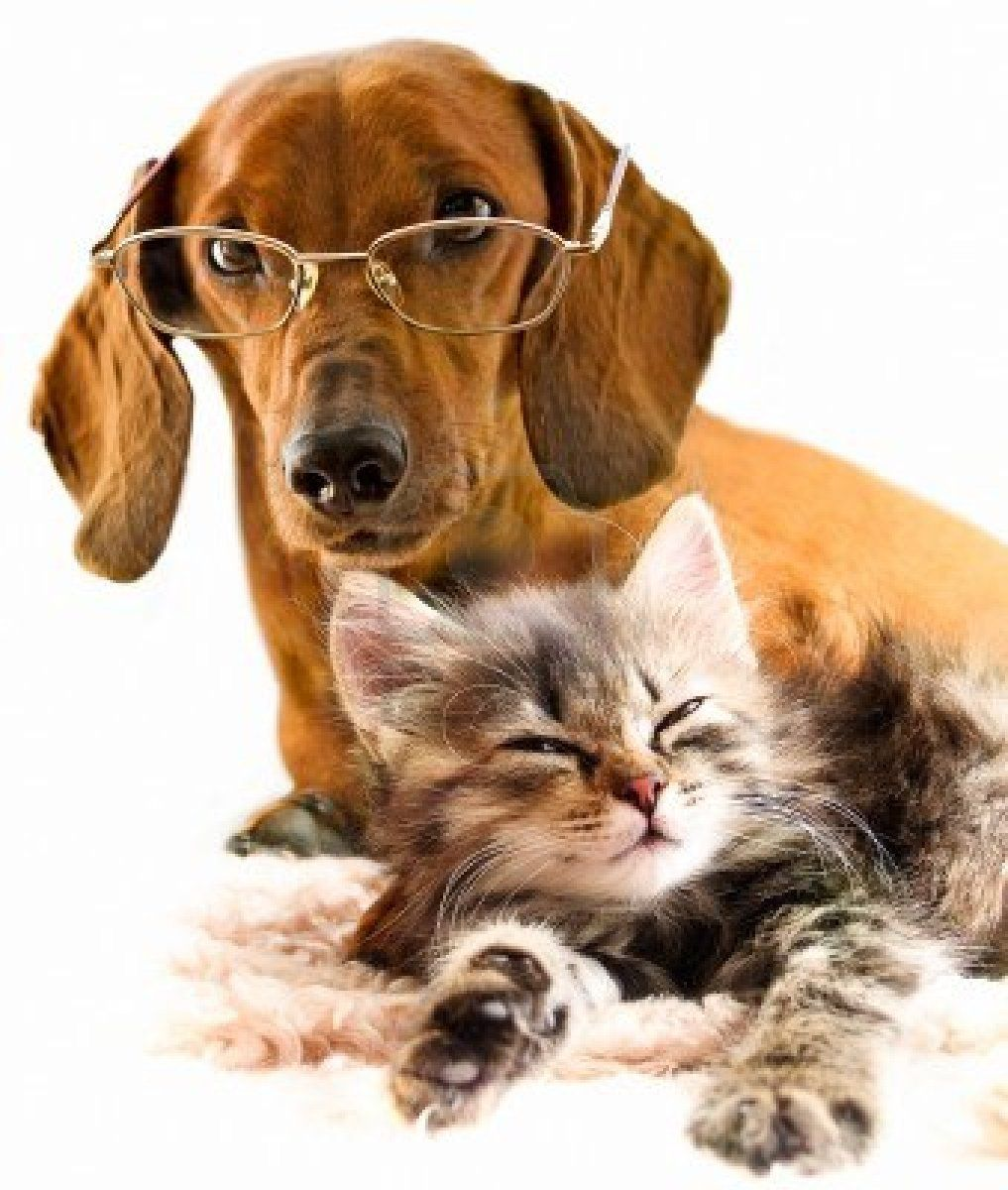 cute dog Dog cat pictures, Cute cats and dogs, Clever dog