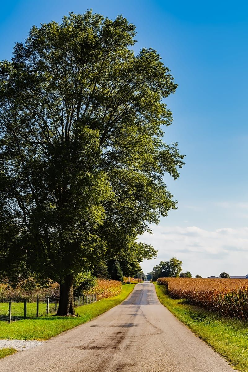 Download this free photo from Pexels at https://www.pexels.com/photo/trees-against-sky-248744/ #road #landscape #nature