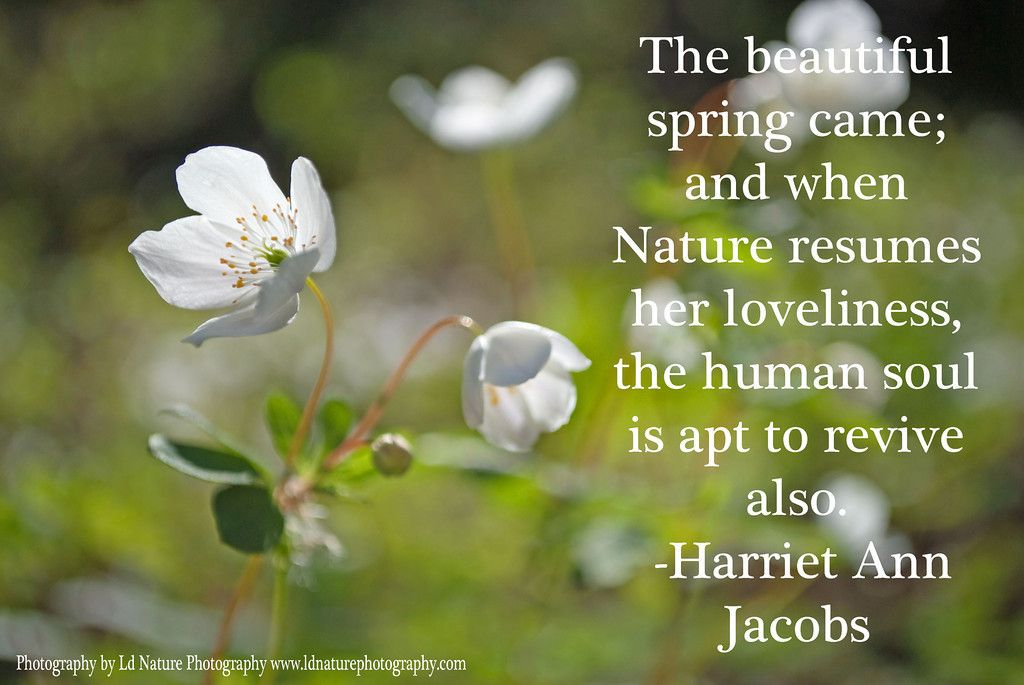 Beautiful Nature Quotes Walking In Nature Nature