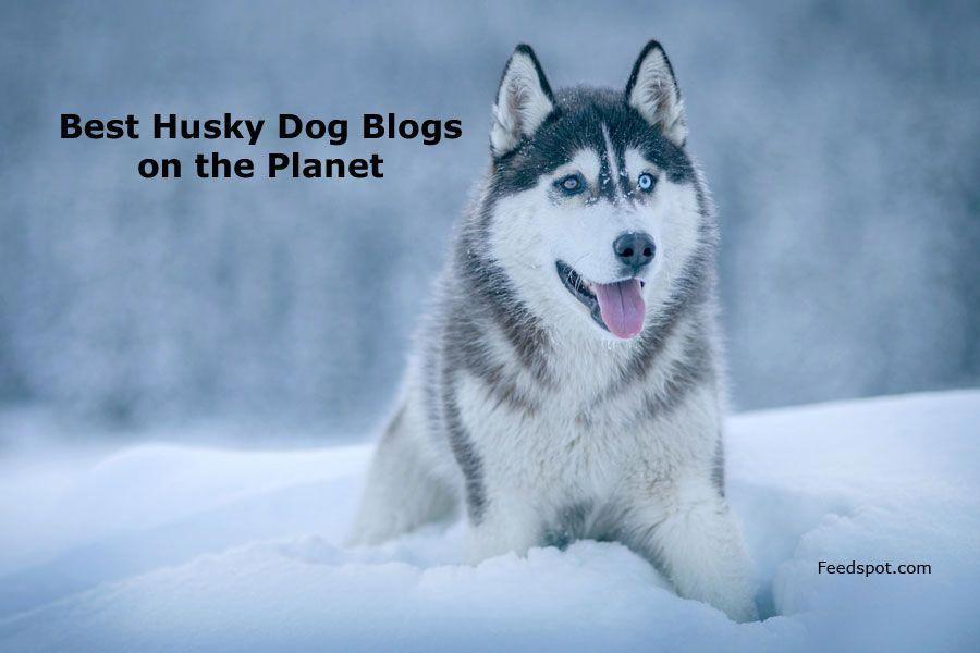 Siberian Husky Red Siberian Husky White Husky Snow Dogs Cute