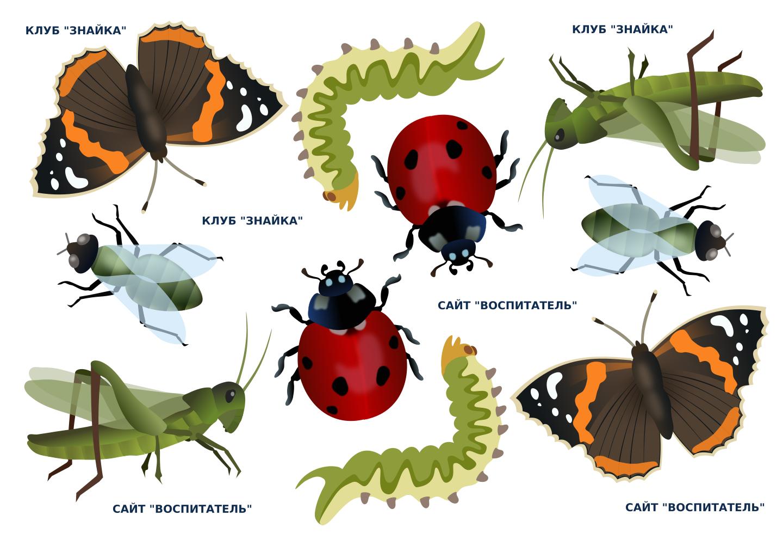 Моей, насекомые картинки для детей дошкольного возраста