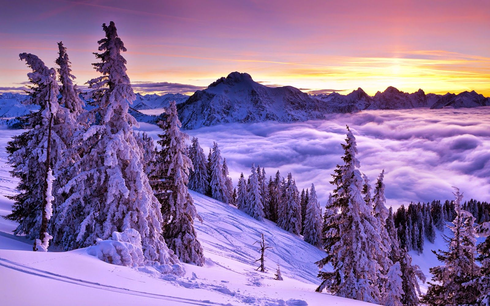 Purple World HD Wallpaper 1080p Winter wallpaper, Winter