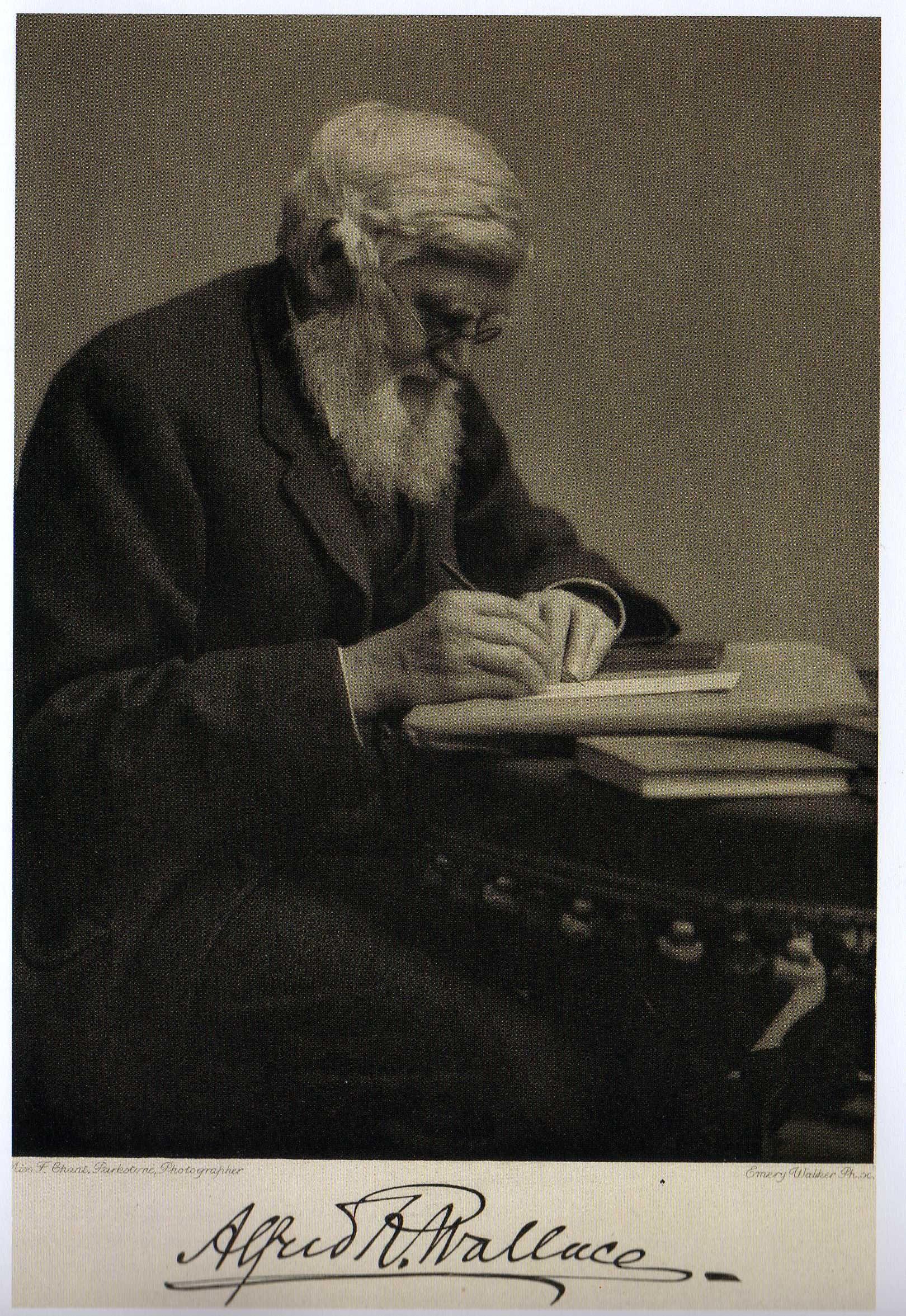 Retrato De Alfred Russel Wallace Trabajando En Su Escritorio Y Firma Theory Of Evolution Evolution Natural History [ 2353 x 1620 Pixel ]