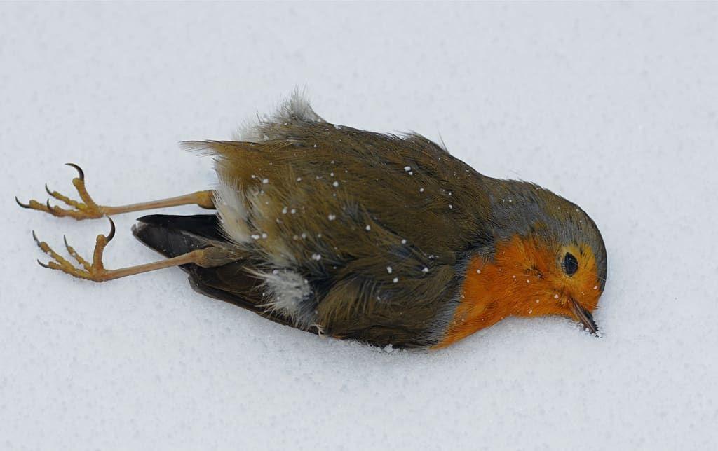 تفسير رؤية الطير الميت في المنام موسوعة Bird Birds Animal Skulls