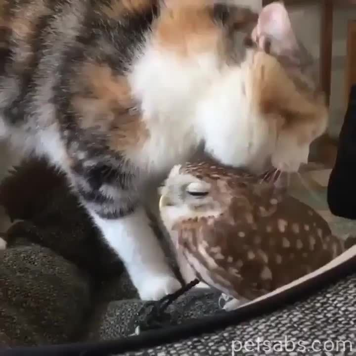 leem leem leem self leem #cat #owl #adorablekittens