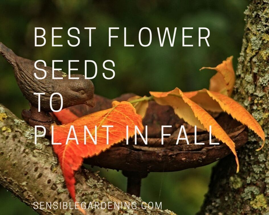 Best flower seeds to plant in fall sensible gardening