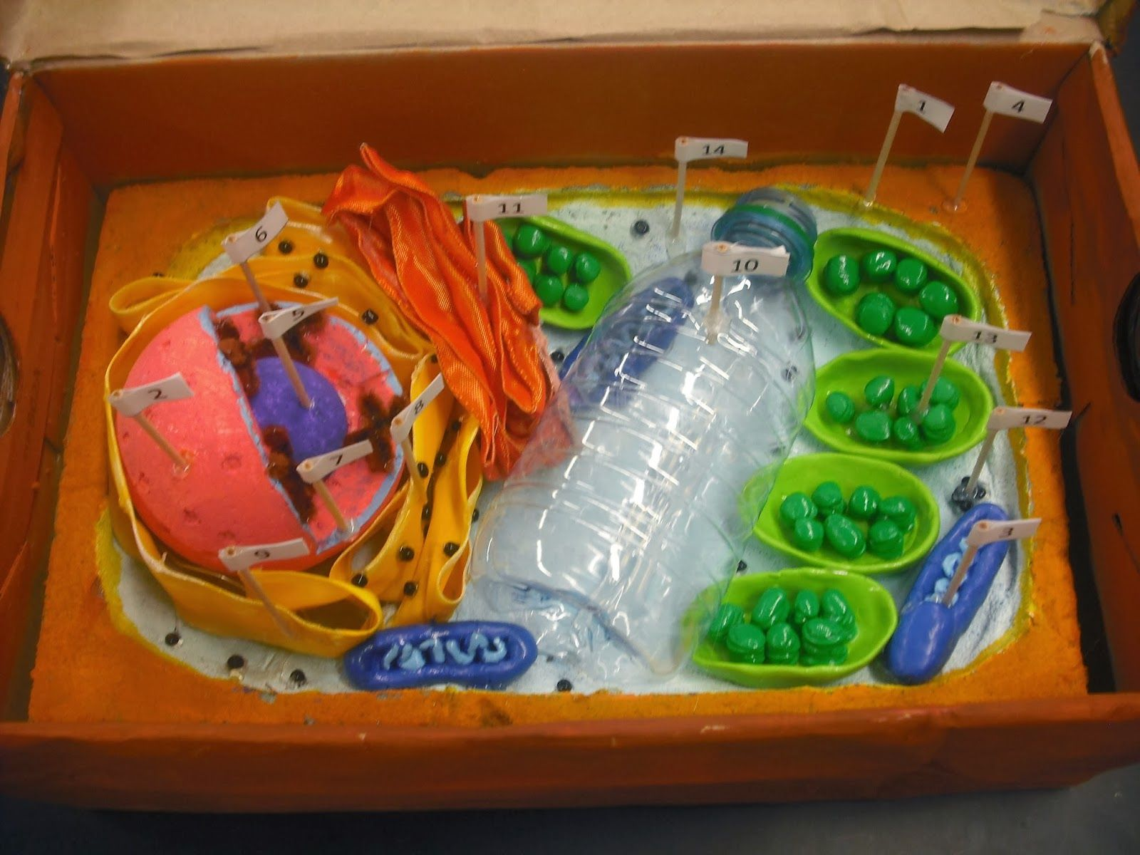 designed by youth pollicita middle school animal and plant cell models by mr lalata s 7th 8th grade students [ 1600 x 1200 Pixel ]